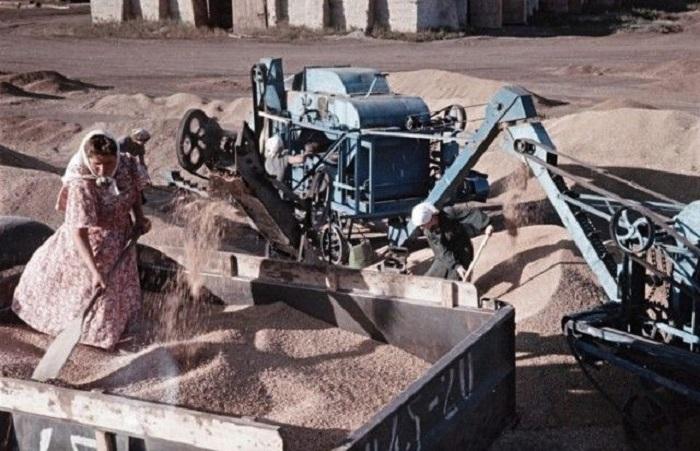 Вот так урожай пшеницы!