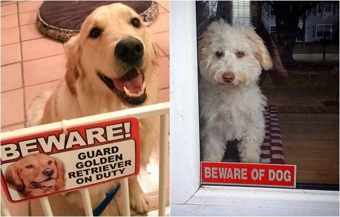 «Осторожно! Во дворе злая собака!».