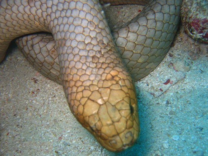 Яд морских змей является очень опасным, но во время укуса вводится менее 0,1 миллиграмма, чего обычно недостаточно для того, чтобы убить человека.