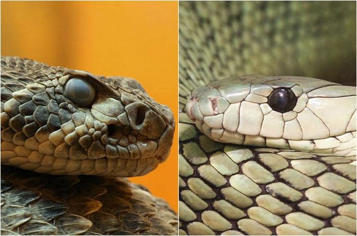 Самые опасные змеи планеты.
