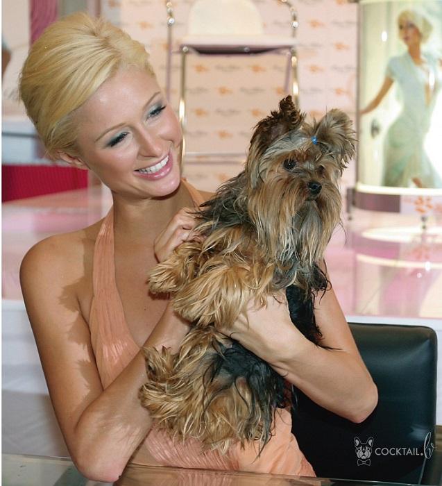 Знаменитая американка отдает предпочтение маленьким собачкам декоративных пород - йоркширским терьерам и чихуахуа.