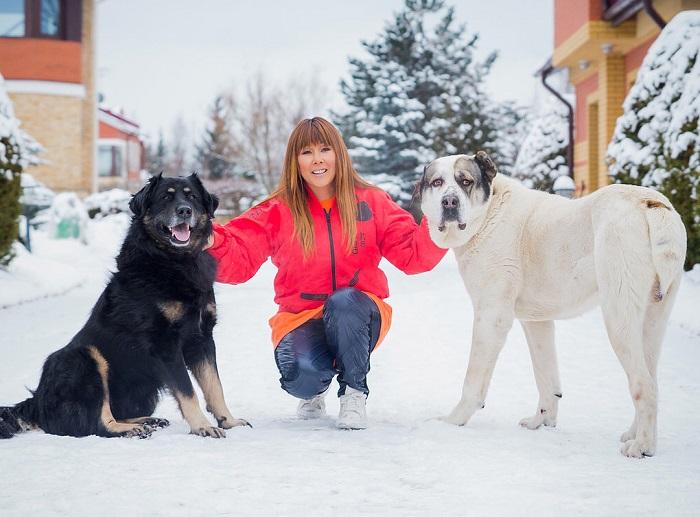 Российская певица в окружении огромных домашних питомцев из породы волкодавов.
