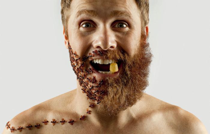 Красные муравьи органично сочетаются с бородой.