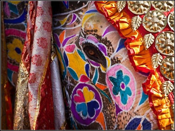 Elephant Festival, India