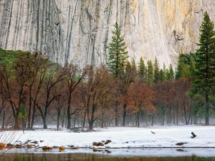 Winter Morning, Yosemite