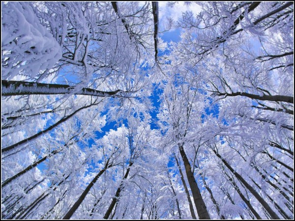 Beech Forest, Germany