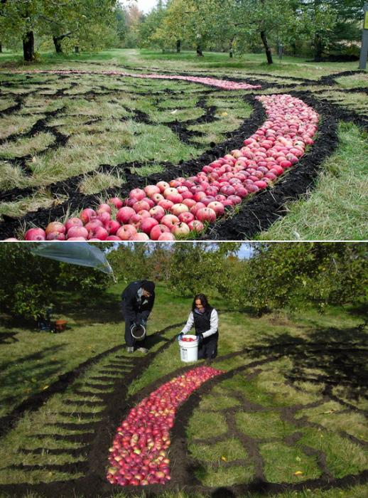 Мандала из яблок, лэнд-арт художницы Агнесс Дюмушель (Agnes Dumouchel)