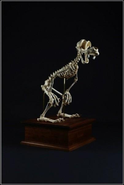 Animatus, или диснеевские скелеты Хюнгко Ли (Hyungkoo Lee)