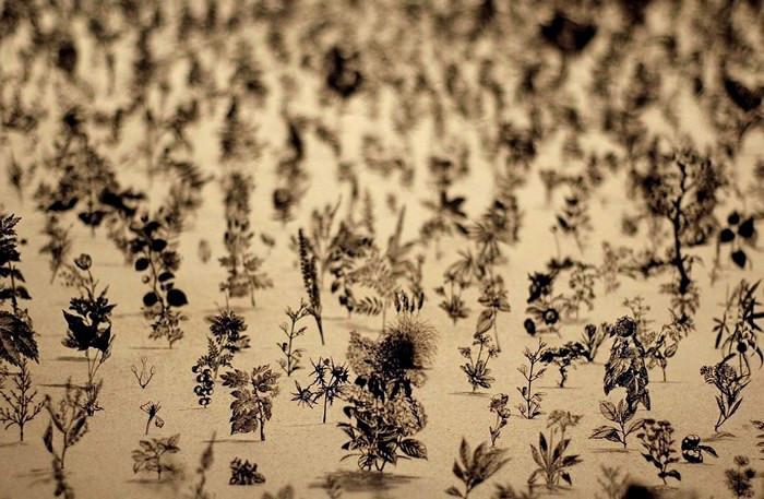 Черное поле Blackfield. Необычная инсталляция Бена–Давида Задока