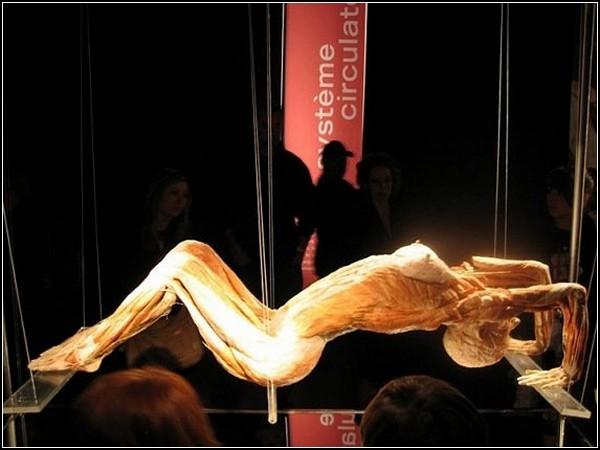 Скульптуры из трупов в музее Гюнтера фон Хагенса (Gunther von Hagens)