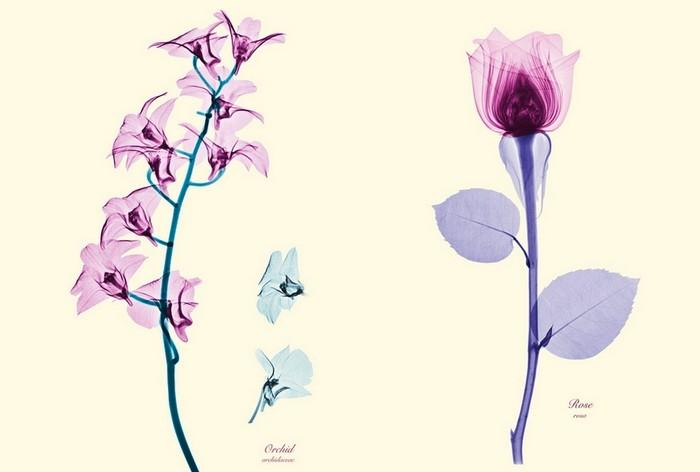 Цветы в рентгеновских лучах и немного фотошопа. Арт-проект от Brendan Fitzpatrick