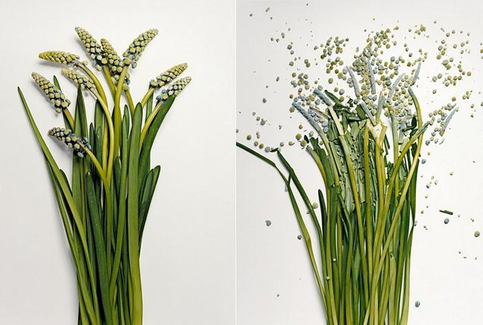 Живые цветы в арт проекте broken flowers