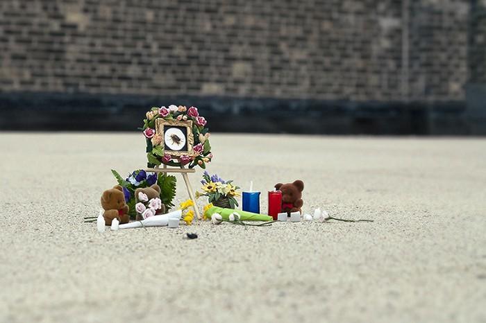 Инсталляция Bug Memorials в память о погибших жуках