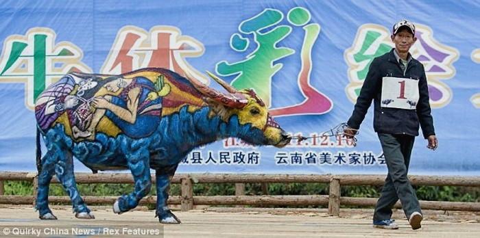 Bull Painting Festival, ежегодный традиционный фестиваль боди-арта на быках