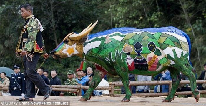 Рисунки на быках