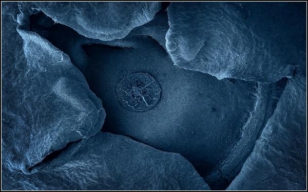 Фотография черники под микроскопом