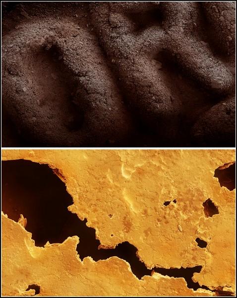 Макрофотография печенья Oreo (вверху) и печенья с предсказанием