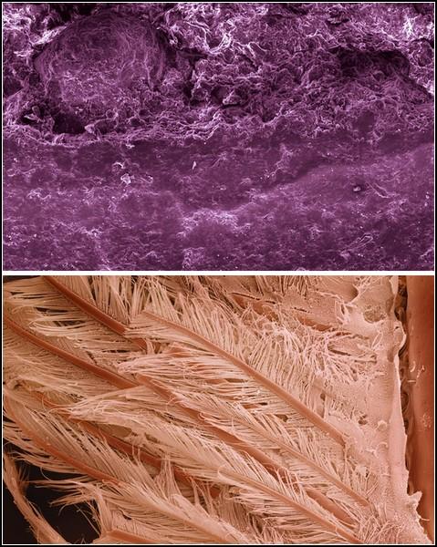 Многократно увеличенное фото витамина С (вверху) и хвоста креветки
