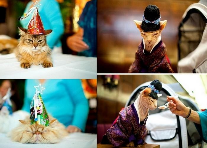 Meow Wear Fashion Show, показ кошачьей моды в отеле Algonquin