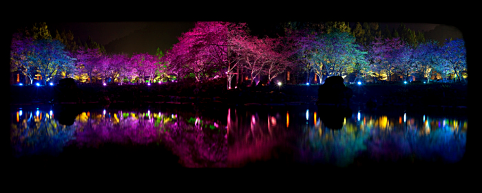 Cherry Blossom Festival, или фестиваль цветущей вишни
