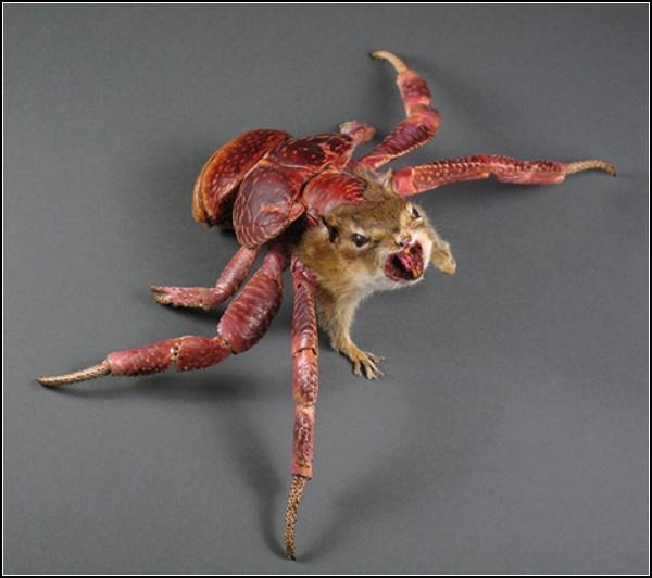 Животные-гибриды в скульптурах таксидермиста Enrique Gomez De Molina