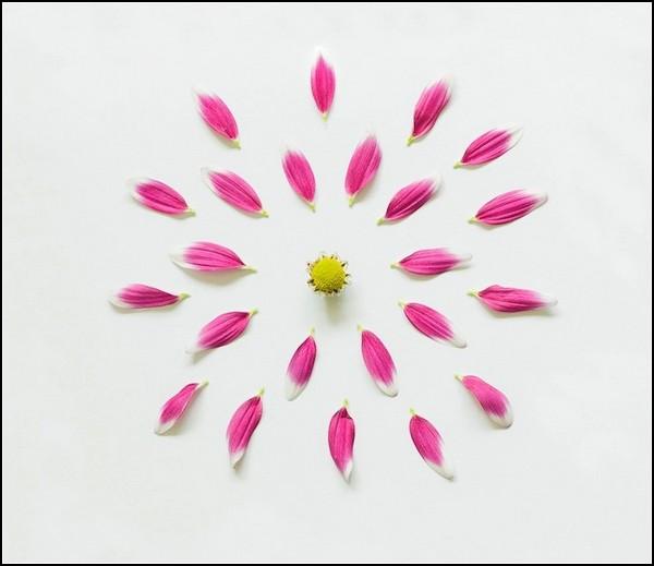 Фотопроект Exploding Flowers. Лепестковые лучики неопознанного цветка