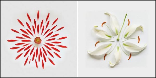 Exploding Flowers от Qi Wei. Взорванные цветы в фотографиях-солнышках