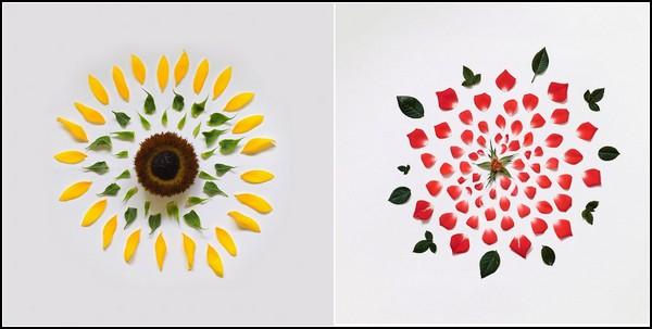 Exploding Flowers. Цветы, разобранные на запчасти