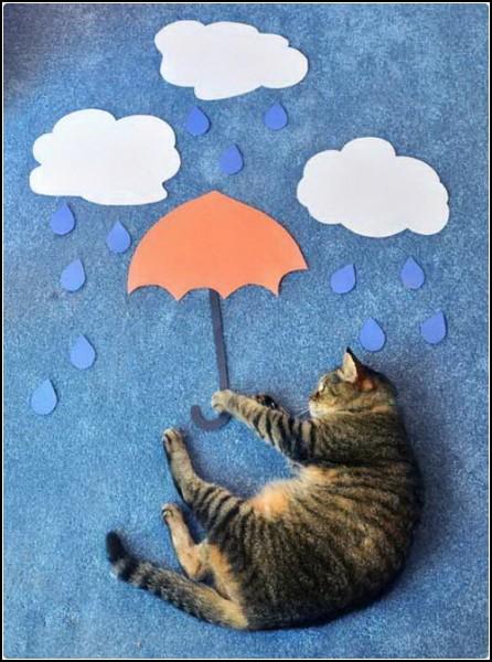 Сны о полетах кота Флаффи (Fluffy)
