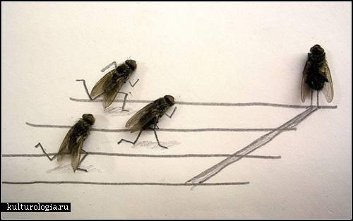 Fly fun. Игры с мухами
