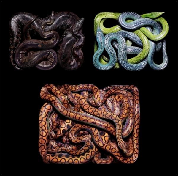 Искусство рисовать змеями от Гвидо Мокафико (Guido Mocafico)
