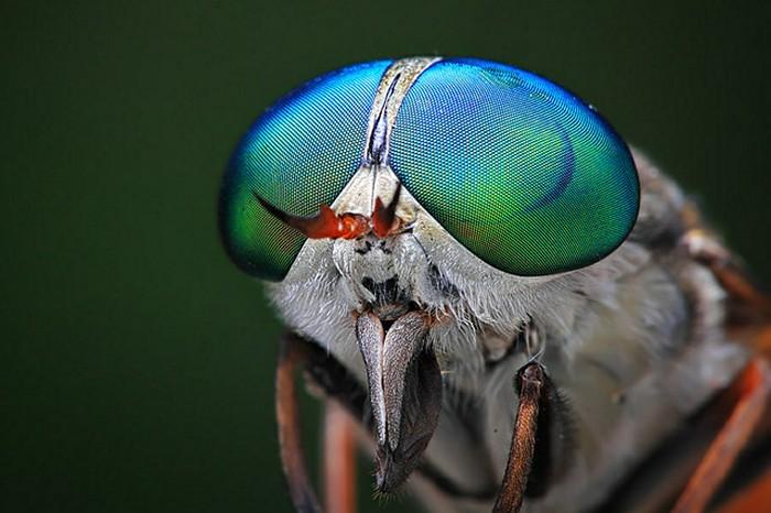 Портреты насекомых *глаза в глаза*. Insect Eyes от Шикхей Го