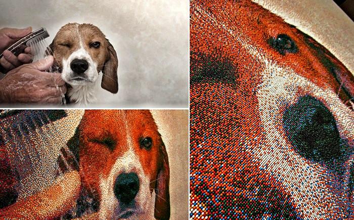 Портрет собаки, состоящий из 221 тысячи сахарных шариков. Картина Джоэля Брошу (Joel Brochu)