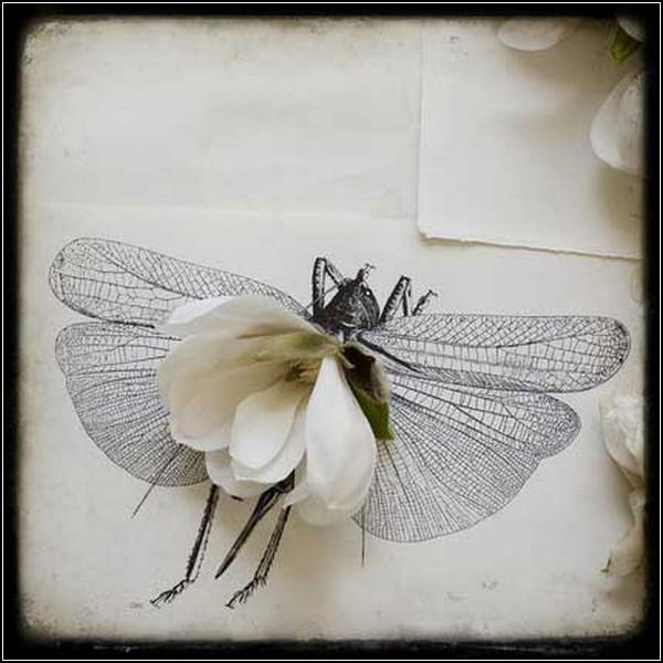 Цветы и жуки - две составляющих искусства