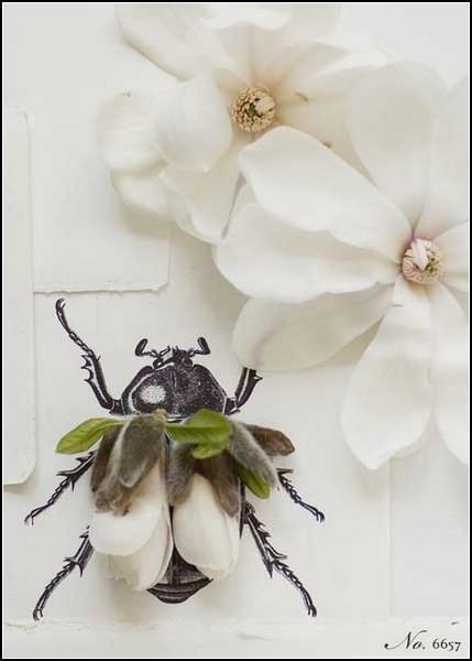 Цветочно-лепесточные насекомые от Кари Херер (Kari Herer)
