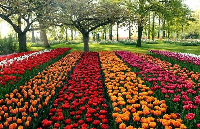 Голландский парк Keukenhof с 7 млн. цветов на 32 га