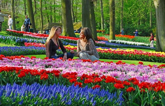 Парк Keukenhof в Нидерландах - рай для любителей цветов