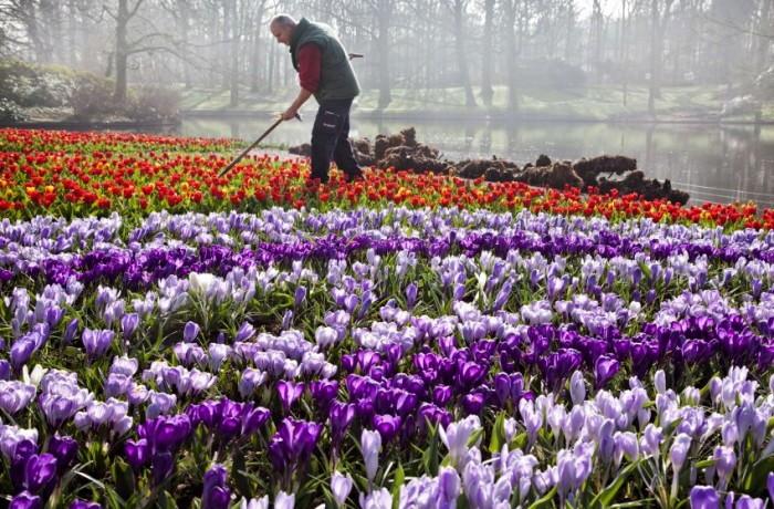 Буйство красок в цветочном царстве парка Keukenhof