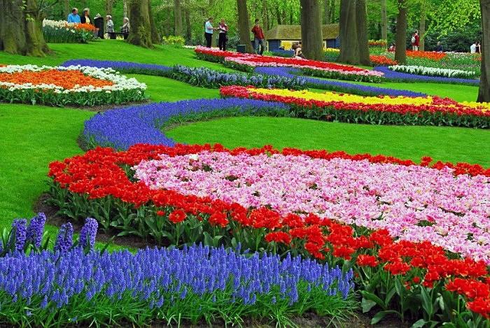 Невероятные тюльпаны множества цветов и разновидностей в голландском парке Keukenhof