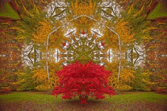 Порталы (Portals). Серия удивительных реконструкций фотографий живой природы