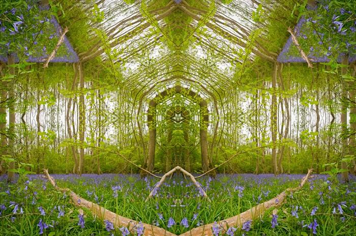 Порталы (Portals). Серия фотоманипуляций с лесными пейзажами от Мэтта Уолфорда (Matt Walford)