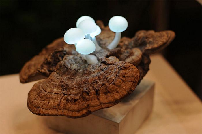 Чудо-грибочки. Светильник-инсталляция Mushroom Lights