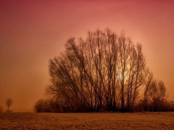 Trees in Fog, Germany