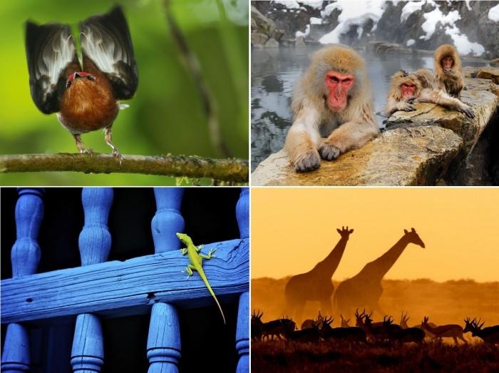 Лучшие фотографии за 02-08 июля от National Geographic