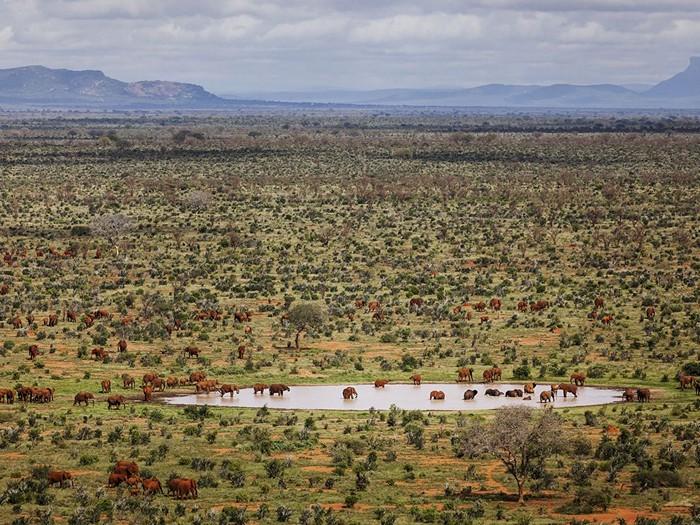 Red Elephants, Kenya