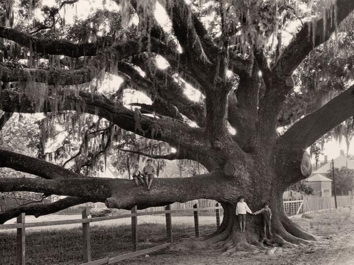 Oak Tree, Louisiana