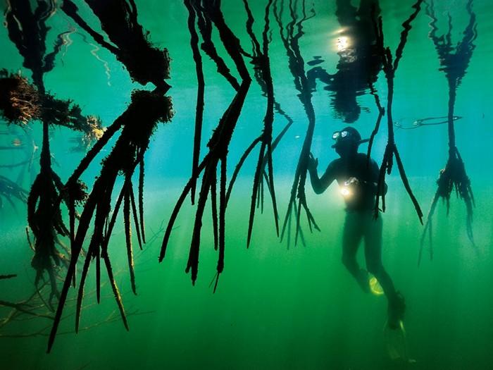 Mangroves, Central America