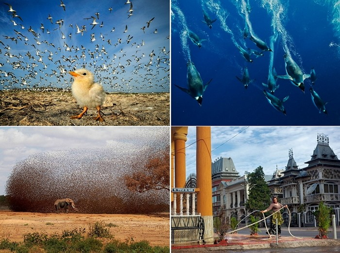 Лучшие фотографии за 29 октября - 04 ноября от National Geographic