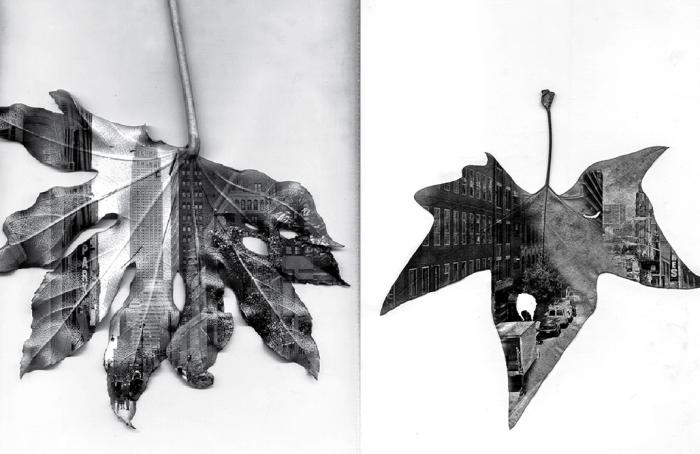 Пейзажи на опавших листьях. Арт-проект в поддержку Нью-Йорка.