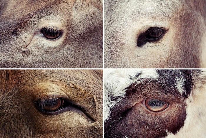 Вселенская печаль, что отражается в глазах зверей из зоопарка. Фотопроект Caged